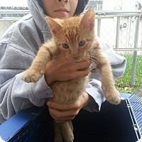 Adopt A Pet :: Stabler - Ft. Lauderdale, FL