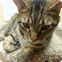 Adopt A Pet :: Picasso - West Dundee, IL