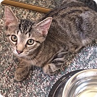 Adopt A Pet :: Larry - Chesterfield Township, MI