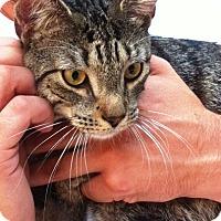 Adopt A Pet :: Marcin - Brooklyn, NY