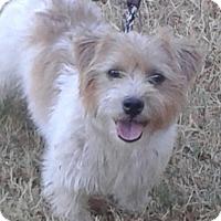 Adopt A Pet :: Ruckus In Denton - Dallas/Ft. Worth, TX
