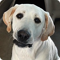 Adopt A Pet :: Lady - Waco, TX