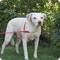 Adopt A Pet :: Toby - st. jacob, IL