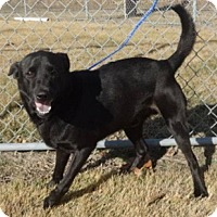 Adopt A Pet :: Marty - Olive Branch, MS