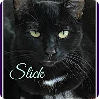 Adopt A Pet :: Slick - Gonic, NH