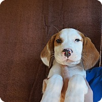 Adopt A Pet :: Madison - Oviedo, FL