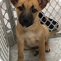 Adopt A Pet :: Manny - Harrisburg, NC