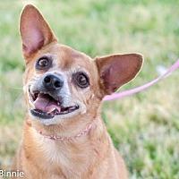 Adopt A Pet :: Rosie - Tucson, AZ