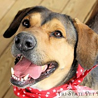 Adopt A Pet :: Freeway - Blue Ridge, GA