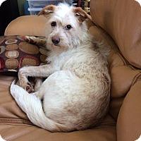Adopt A Pet :: Aubree - Guelph, ON