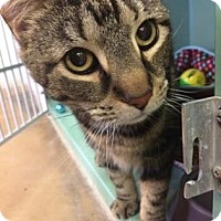 Adopt A Pet :: Mousey - Philadelphia, PA