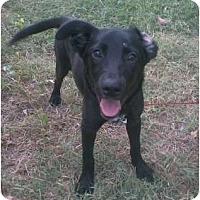 Adopt A Pet :: Briley - Houston, TX