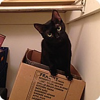 Adopt A Pet :: Mami - Chicago, IL