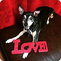Adopt A Pet :: Chopper - Davie, FL