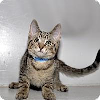Adopt A Pet :: Walnut - Medina, OH