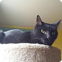 Adopt A Pet :: Seal - Monroe, CT