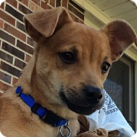 Adopt A Pet :: Sissy - Knoxville, TN