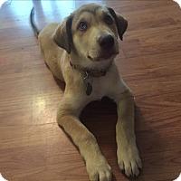 Adopt A Pet :: Bree - Homewood, AL