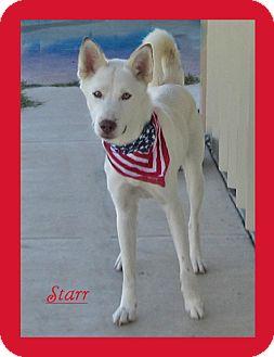 German Shepherd Dog/Husky Mix Dog for adoption in Hillsboro, Texas - Starr