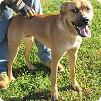 Adopt A Pet :: Banjo - Reeds Spring, MO