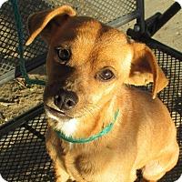 Adopt A Pet :: Wayne - San Francisco, CA