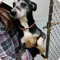 Adopt A Pet :: Stanley - Newport, KY