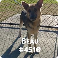 Adopt A Pet :: Beau - Alvin, TX
