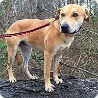 Adopt A Pet :: Buddy - Somonauk, IL