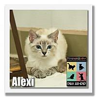 Adopt A Pet :: Alexi - Palm Desert, CA