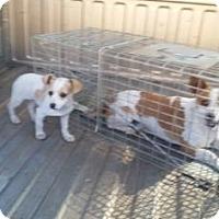 Adopt A Pet :: Cap'N Crunch - Fresno CA, CA