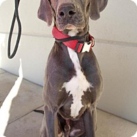 Adopt A Pet :: Tyson - Pipe Creed, TX