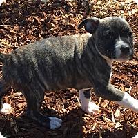 Adopt A Pet :: Sasha - Manchester, NH