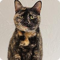Adopt A Pet :: Skeeter - Bradenton, FL