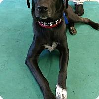 Adopt A Pet :: Duke/Oakley - Huntley, IL