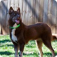 Adopt A Pet :: Dario - Halethorpe, MD