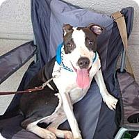 Adopt A Pet :: Mason - Loxahatchee, FL