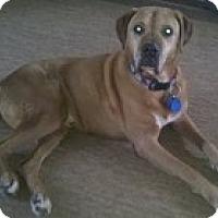 Adopt A Pet :: Saturn - Madison, WI