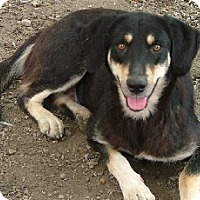 Shepherd (Unknown Type) Mix Dog for adoption in Savannah, Missouri - Jag