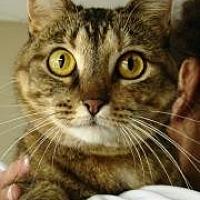 Adopt A Pet :: Bubbles - Ft. Lauderdale, FL