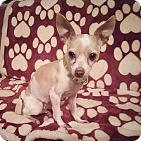 Adopt A Pet :: Cricket - Lawrenceville, GA