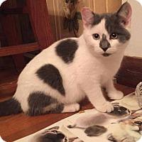 Adopt A Pet :: Rascal - Delmont, PA