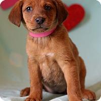 Adopt A Pet :: Krystal - Waldorf, MD