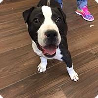 Adopt A Pet :: Louie - Cashiers, NC