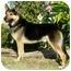 Photo 4 - German Shepherd Dog/Husky Mix Dog for adoption in Los Angeles, California - Billy von Haegele