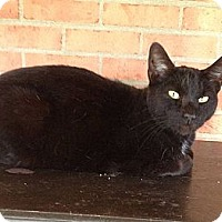 Adopt A Pet :: Midnight - Troy, OH