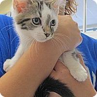 Adopt A Pet :: Ace - Riverhead, NY