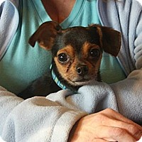 Adopt A Pet :: Chico - Hastings, NY