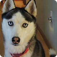 Adopt A Pet :: Reba - Brick, NJ