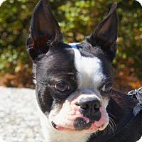 Adopt A Pet :: BUTCH - North Augusta, SC
