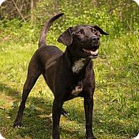 Adopt A Pet :: April - Lewisville, IN